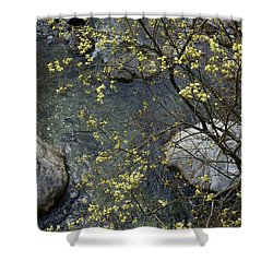 Shower Curtain featuring the photograph Willow Blossom by Phil Banks