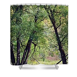 Willow Cathedral Shower Curtain