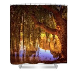 Willow Glow Shower Curtain