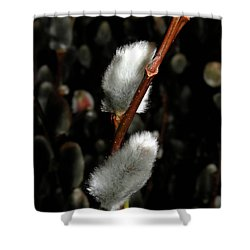 Willow Shower Curtain