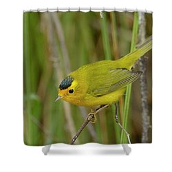 Wilson's Warbler Shower Curtain by Doug Herr