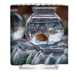 Win A Goldfish Shower Curtain