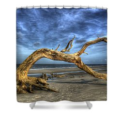 Wind Bent Driftwood Shower Curtain