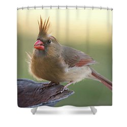 Wind Blown Cardinal  Shower Curtain by Terry DeLuco
