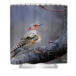Shower Curtain featuring the photograph Wind Blown Flicker by Nava Thompson