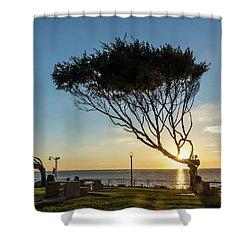 Wind Blown Tree Shower Curtain