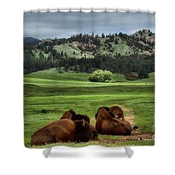 Wind Cave Bison Shower Curtain
