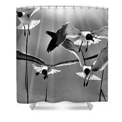 Shower Curtain featuring the photograph Wind Swept Bw by Jan Amiss Photography