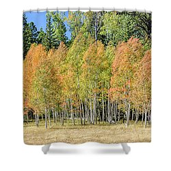 Windblown Aspen Shower Curtain