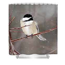 Windblown Chickadee Shower Curtain
