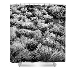 Windblown Grass Shower Curtain