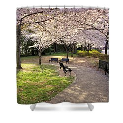 Winding Trail To The Tidal Basin Shower Curtain