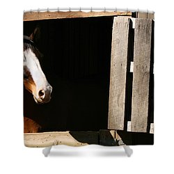 Shower Curtain featuring the photograph Window by Angela Rath