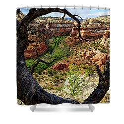 Shower Curtain featuring the photograph Window by Chad Dutson