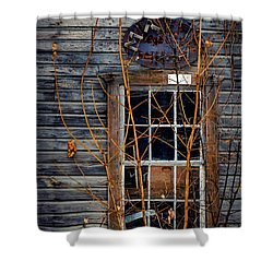Shower Curtain featuring the photograph Window Shopping by Kendall McKernon