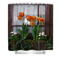 Windowbox Tulips Shower Curtain by Patricia Strand