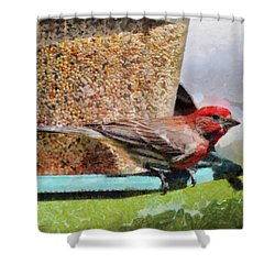 Windsor House Finch Shower Curtain