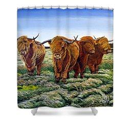 Windswept Highland Cattle  Shower Curtain