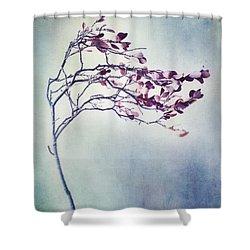 Windswept Shower Curtain by Priska Wettstein