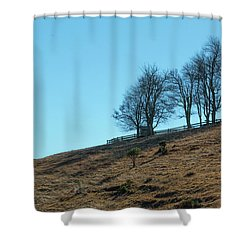 Windswept Trees - December 7 2016 Shower Curtain
