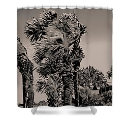 Windy Day At Beach Shower Curtain