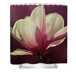 Wine And Cream Magnolia Blossom Shower Curtain by Byron Varvarigos