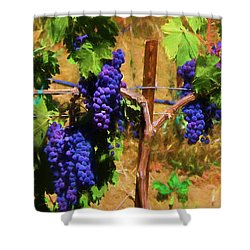 Wine Country  Shower Curtain by Kandy Hurley