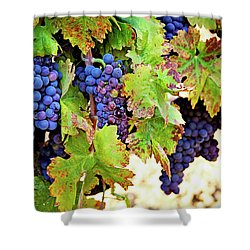 Wine Country - Napa Valley California Photography Shower Curtain