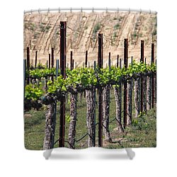 Shower Curtain featuring the photograph Wine Country Spring by Suzanne Oesterling