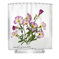 Wine-cup And Primrose Shower Curtain