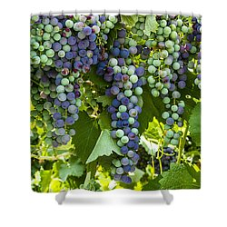 Wine Grape Colors Shower Curtain by Teri Virbickis