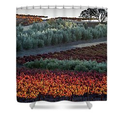 Wine Grapes And Olive Trees Shower Curtain by Roger Mullenhour