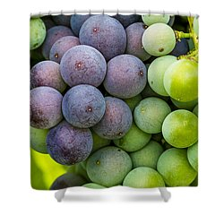 Wine Grapes Close Up Shower Curtain