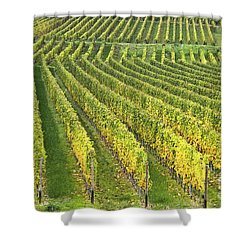 Wine Growing Shower Curtain by Heiko Koehrer-Wagner