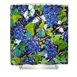Wine On The Vine Shower Curtain by Richard T Pranke
