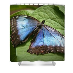 Wingdrops Shower Curtain by David S Reynolds
