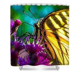 Wings Of A Tiger Shower Curtain
