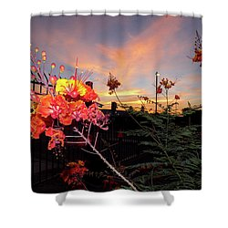 Wings Of Paradise Shower Curtain by Kimo Fernandez