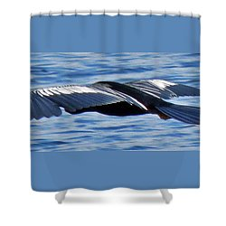 Wings Over Water Shower Curtain