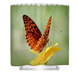 Wings Up - Butterfly Shower Curtain by MTBobbins Photography