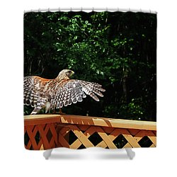 Wingspan Of Hawk Shower Curtain