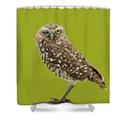 Winking Owl Shower Curtain