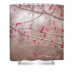 Winter And Spring Shower Curtain
