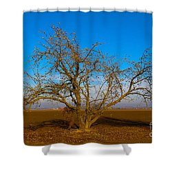 Winter Apple Tree Shower Curtain by Suzanne Lorenz
