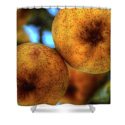 Winter Apples 2 Shower Curtain