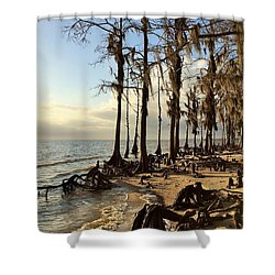 Winter At Fontainebleau State Park, Lake Pontchartrain, La Shower Curtain
