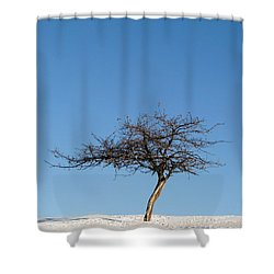Winter At The Crabapple Tree Shower Curtain