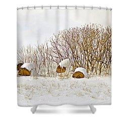 Winter Beauty Shower Curtain by Deborah Benoit