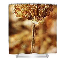 Shower Curtain featuring the photograph Winter Bee Balm by Bruce Carpenter