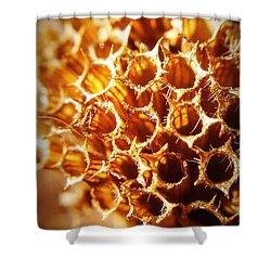 Winter Bee Balm Macro Shower Curtain by Bruce Carpenter